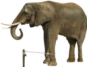 adult elephant